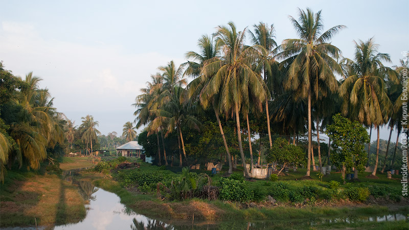 Кокосовые пальмы рядом с морем