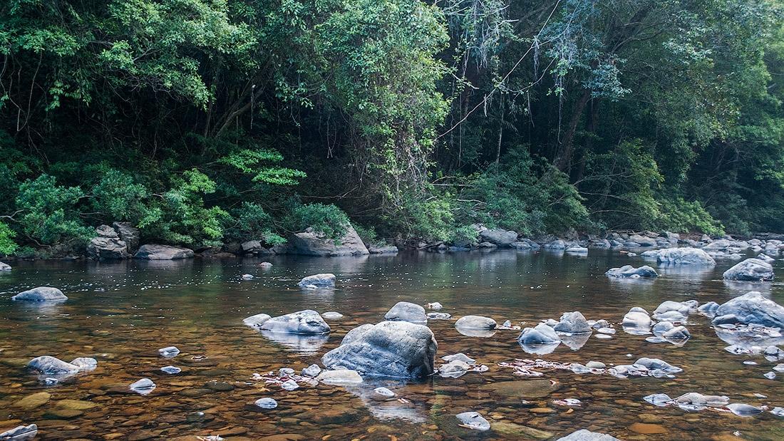 Речка Сунгай Тахан (Sungai Tahan)