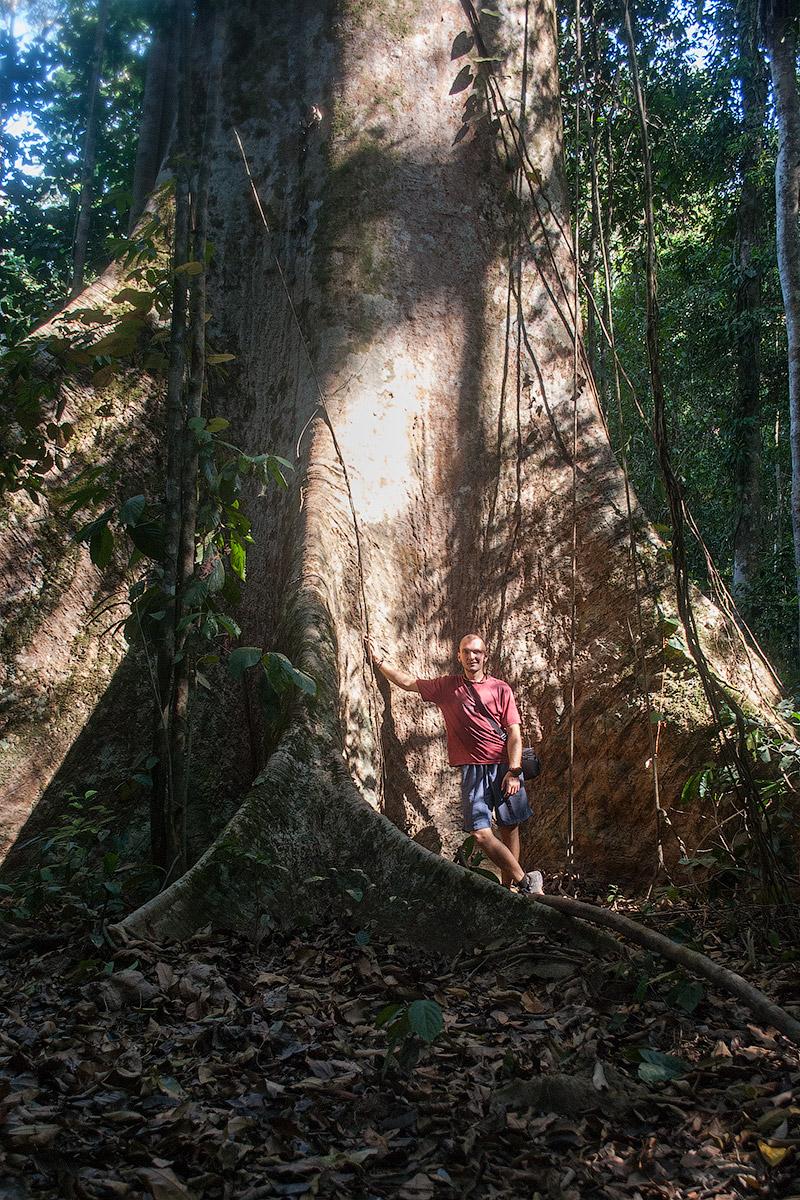 Я на фоне дерева