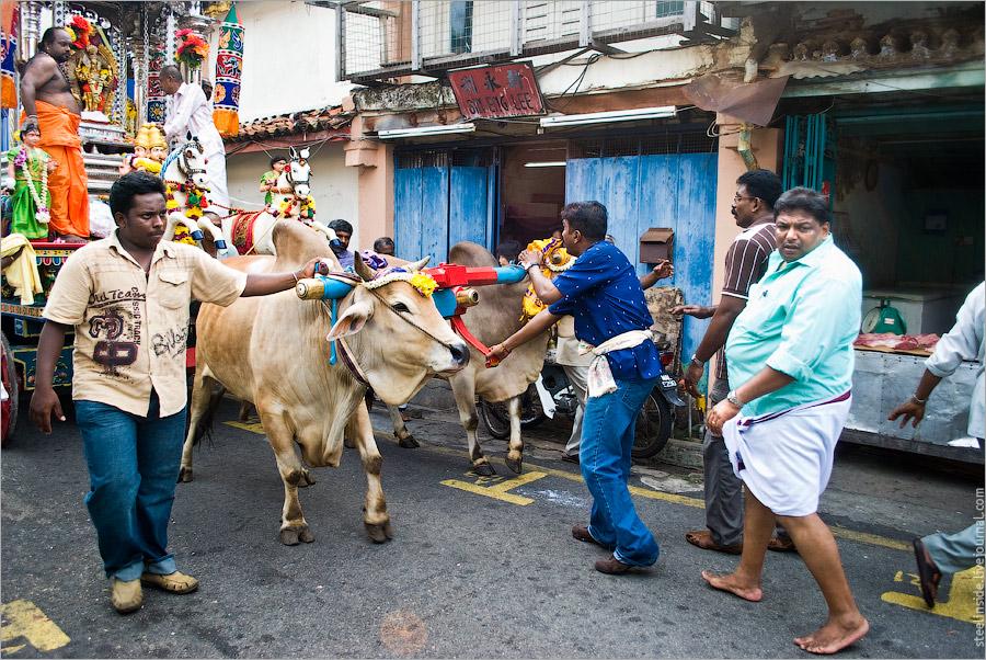 Тамильский праздник Тайпусам