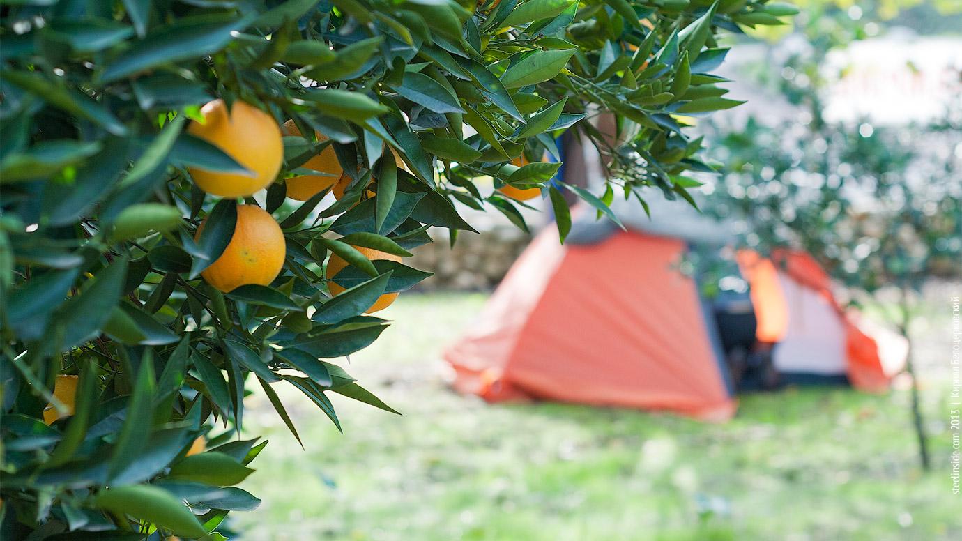 Палатка в апельсиновом саду в Олимпосе
