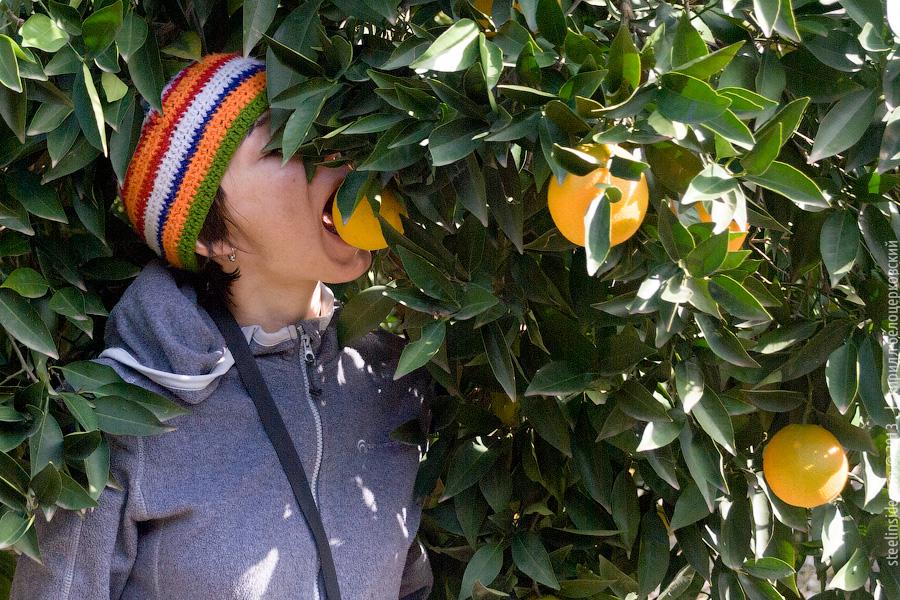 Ольга Тачановская и апельсин